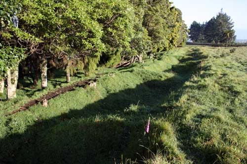 Trench, near Pukerangiora