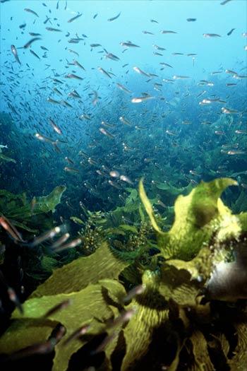 Seaweed habitats