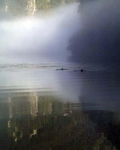 Fiordland bottlenose dolphins