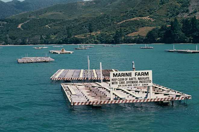 Mussel Farming Aquaculture Te Ara Encyclopedia Of New
