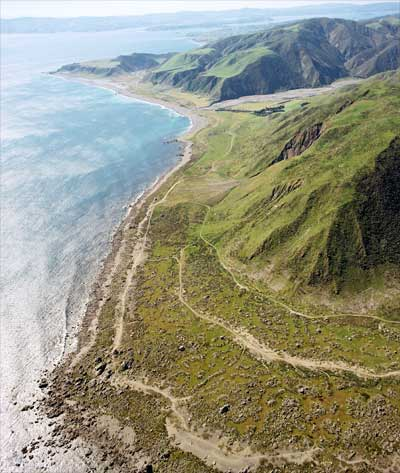 Raised beaches, Turakirae Head
