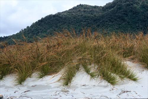 Coastal Landscaping en Massachusetts - Puntos culminantes de la planta e imágenes