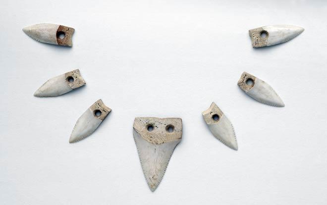 Mako teeth