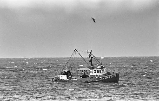 Laying shark nets