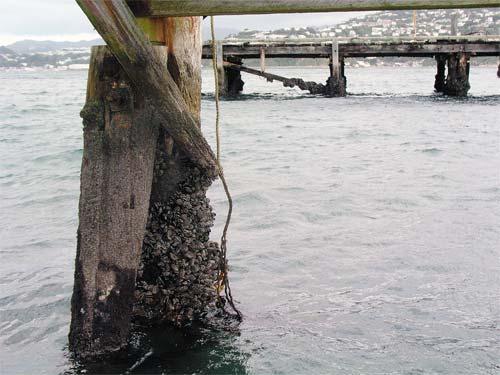 Wharf pile