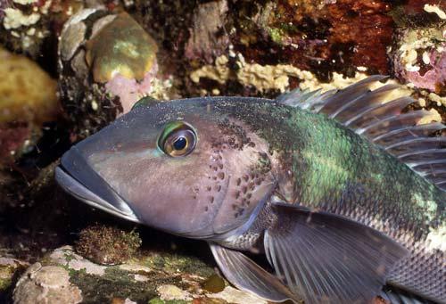 Fiordland's fish