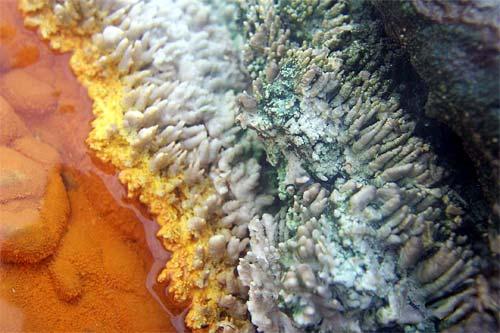 Micro-organisms, Champagne Pool