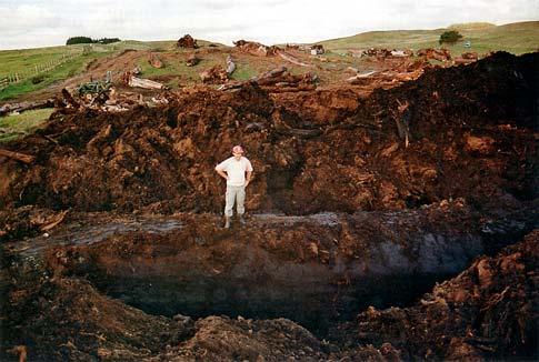 Swamp Kauri Northland Places Te Ara Encyclopedia Of