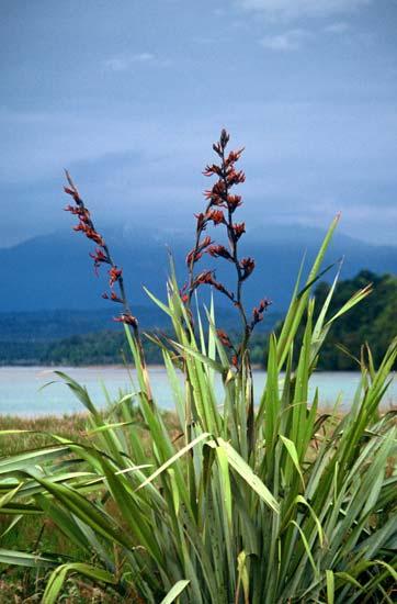 Flax bush