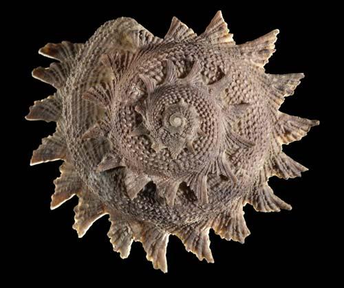 Circular saw shell
