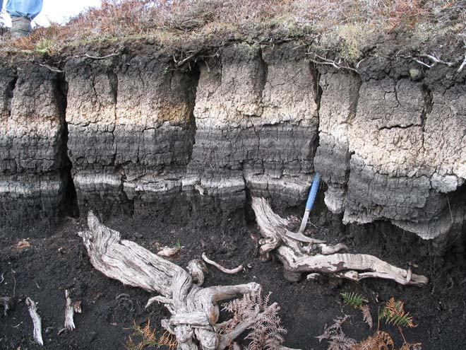 Ash layer, Chatham Islands
