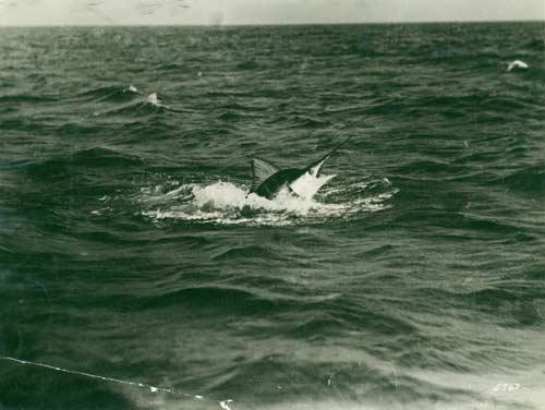 Swordfish broaching
