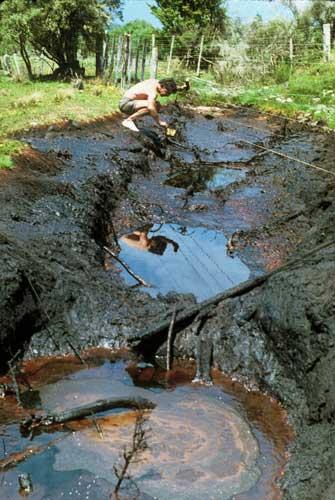 Oil seep, Kōtuku