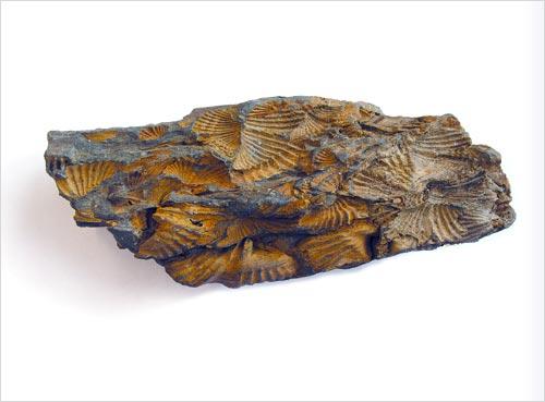Deformed shells