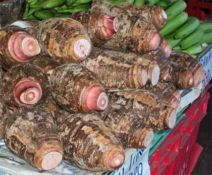 Taro tubers for sale
