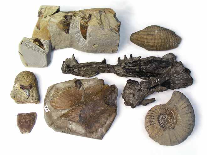Cretaceous fossils