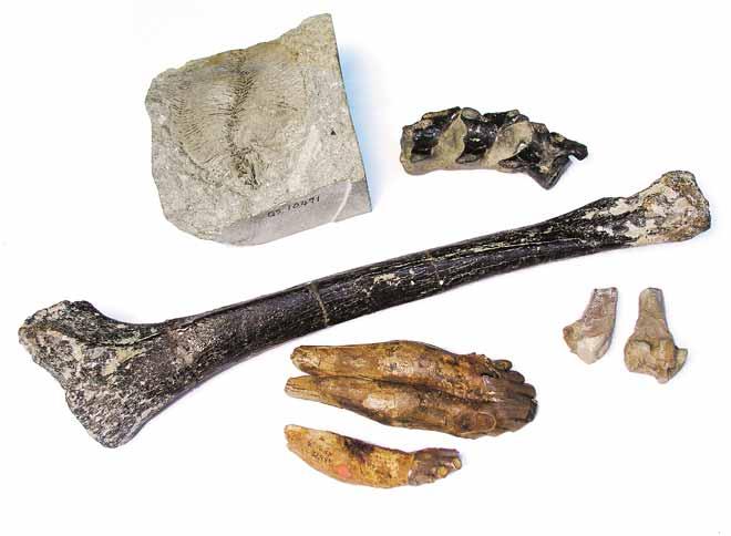 Cenozoic vertebrates