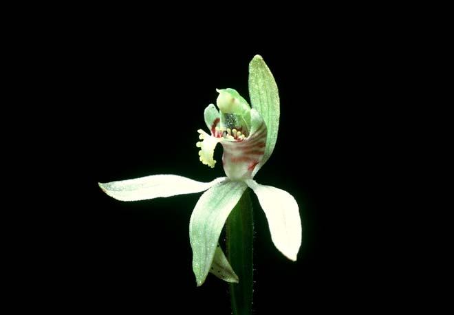 Orchid flower parts