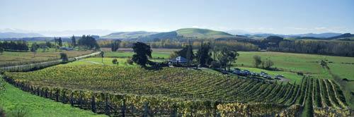 Ōpihi vineyard
