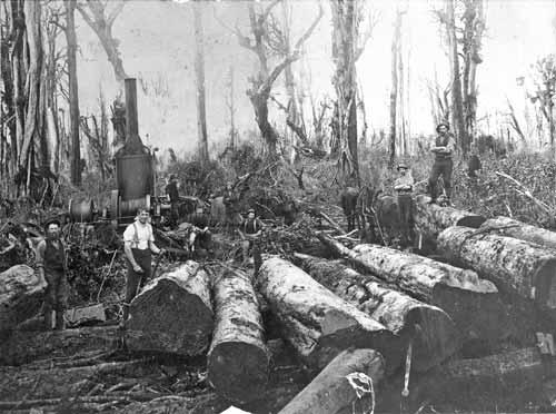 Taranaki loggers