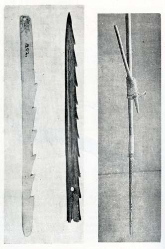 Bird spear points