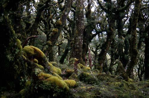 Tararua fairyland
