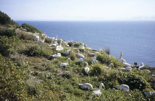 Concrete gannets