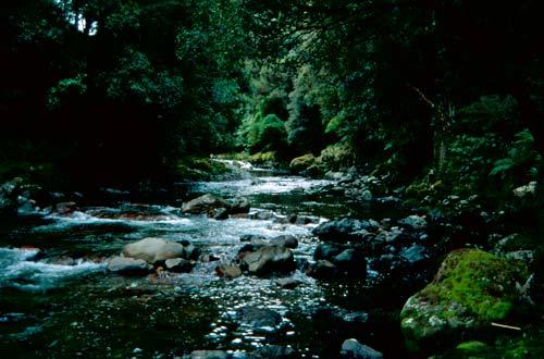 River flowing through bush