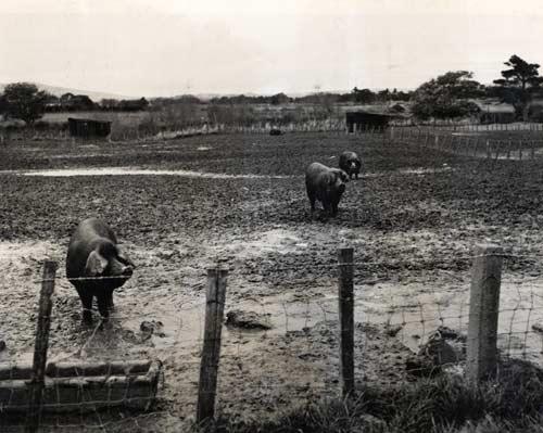 Muddy paddock