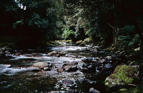 Shaded waterway