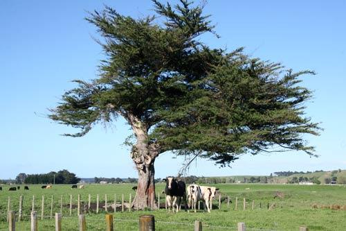 a windy place  u2013 shelter on farms  u2013 te ara encyclopedia of