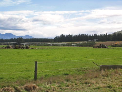 Irrigated Southland dairy pastures