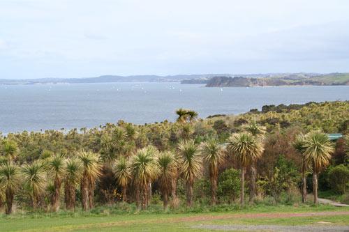 Tiritiri Matangi sanctuary