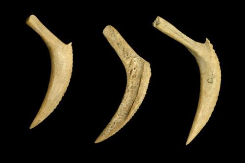 Bone fish hooks