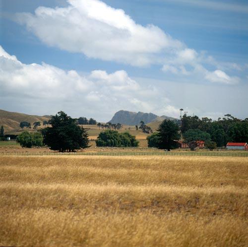 Dryland pastures