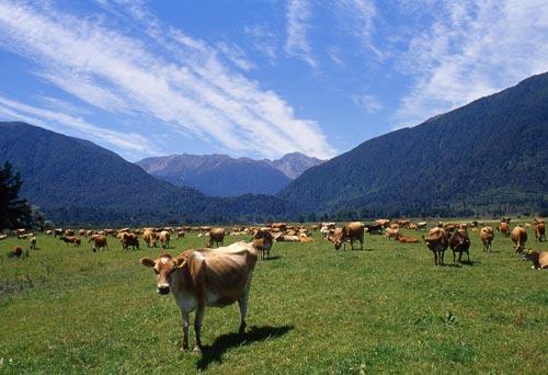 Dairy lands