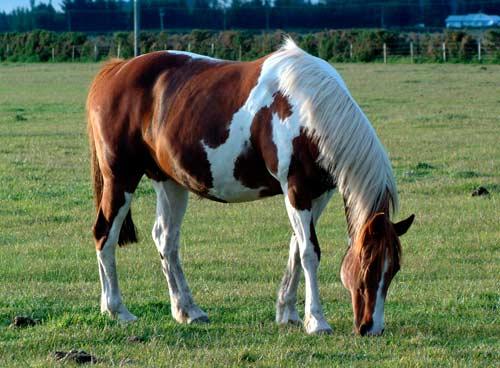 Horse pastures