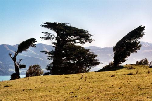 Ngā rākau ki Te Hakaroa (Banks Peninsula)