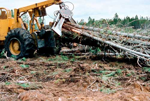 Grapple skidder