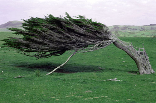 Growing against the wind