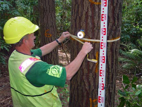 Measuring a tree