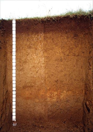 Dannevirke soils