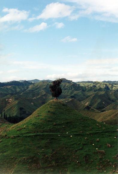 Whanganui hill country