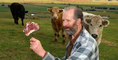 Prize-winning steak and surviving cattle