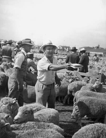 Auctioning sheep