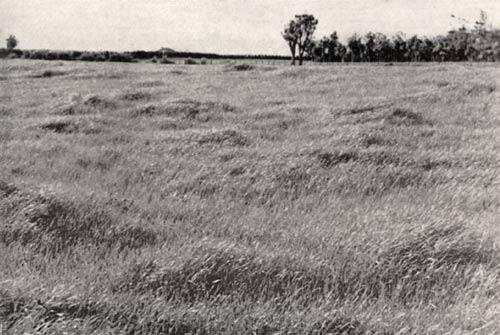 Fertile grassland