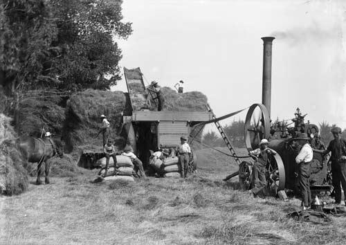 A steam engine powers this threshing machine in Ha...