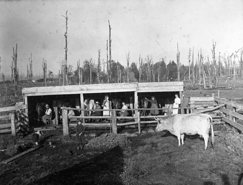 Old milking shed