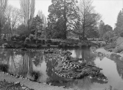 Bog garden, Christchurch Botanic Gardens