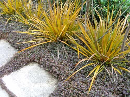 Colourful natives gardens te ara encyclopedia of new for New zealand garden designs ideas